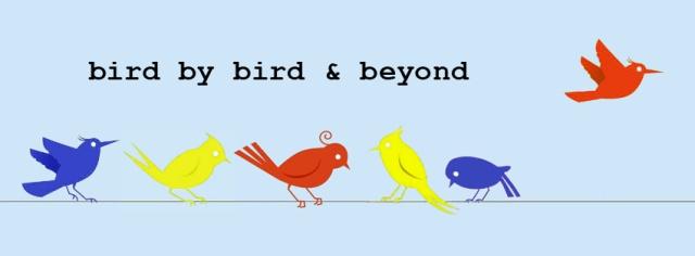 bird primary